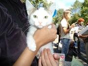 Отдам в добрые руки котенка,  мальчик,  2 месяца,  очень ласковый